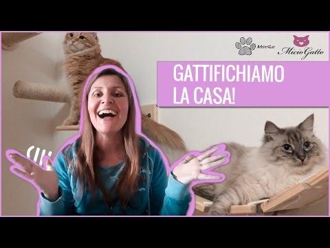 Arredamento per gatti: l'arricchimento ambientale!