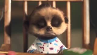 compare the meerkat baby oleg - Thủ thuật máy tính - Chia sẽ