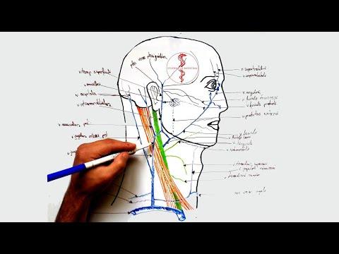 Medicamente pentru întărirea articulațiilor și ligamentelor
