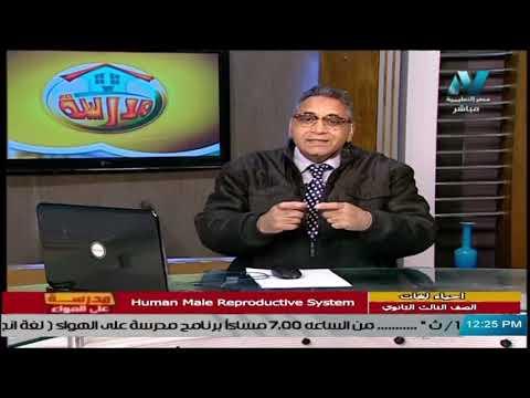 أحياء لغات للصف الثالث الثانوي 2021 - الحلقة 19 - Human Male Reproductive System