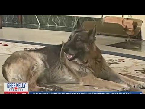 Newsmax Attacks Biden's Dog As Not Presidential