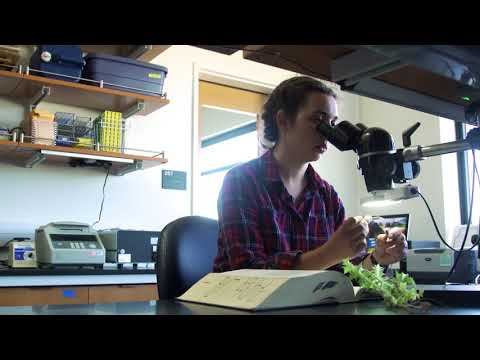 Learning in UC Santa Cruz's outdoor classrooms