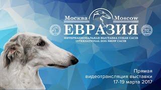 Евразия 2017 (день 1, главный ринг)