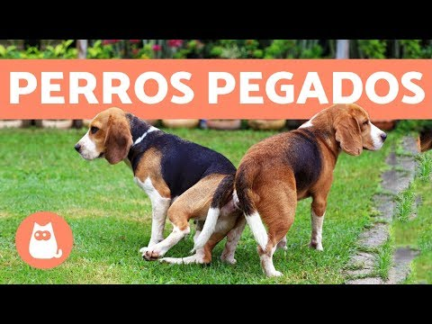 Video de sexo bello español