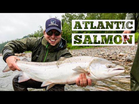 Atlantic Salmon On The Fly - Restigouche River, NB