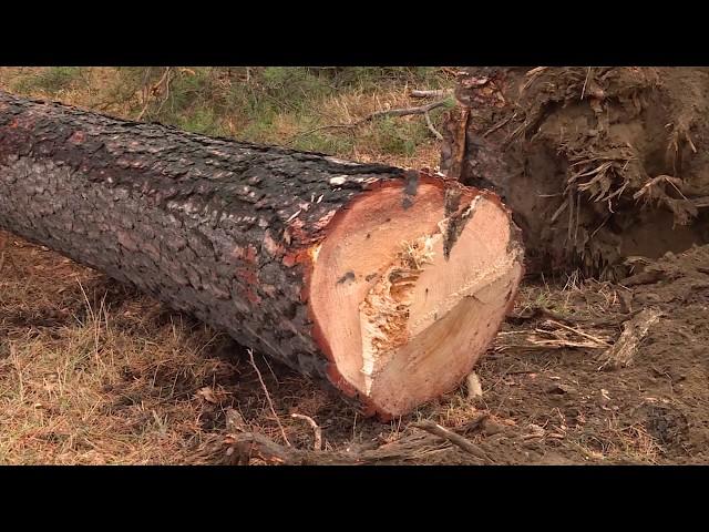 В парке 10-летия Ангарска вырубили деревья