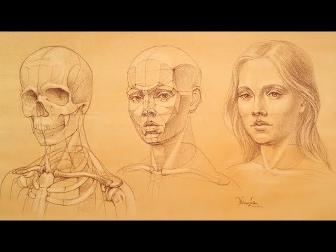 Head and Face Proportions