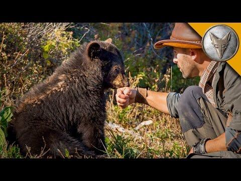 Kojotův medvídek - Brave Wilderness