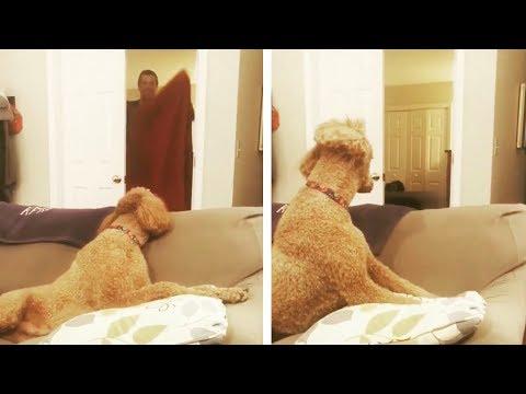 #WhatTheFluffChallenge: Neuer Handtuchtrick verwirrt Hunde