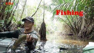Lội Trong Rừng Miệt Thứ-Bắt Toàn Cá Ngon