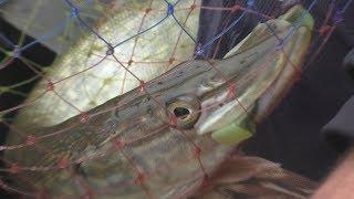 Смотреть онлайн Рыбалка в ноябре: с чего начать