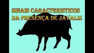 Sinais característicos da presença de javalis selvagens.