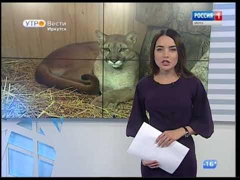 Выпуск «Вести-Иркутск» 15.01.2019 (05:35)