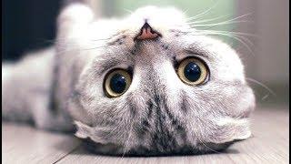 Смешные Kошки и Милые Котята 2019 ♥ Cat Marabacha #33