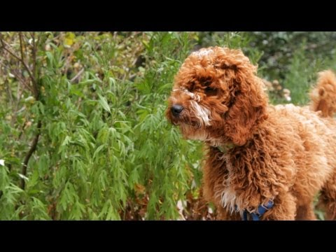 What You Should Know About Dog Grooming | Puppy Care