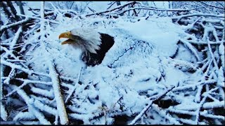 Decorah Eagles- Snow Covered Mom Calls Out For DM2
