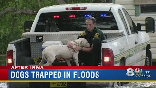 Lakeland dogs rescued from high water infested with fire ants