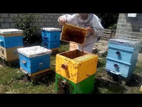 ПРОСТОЙ СПОСОБ КАК ИСПРАВИТЬ ПЧЕЛУ ТРУТОВКУ с помощью объединения пчелосемей
