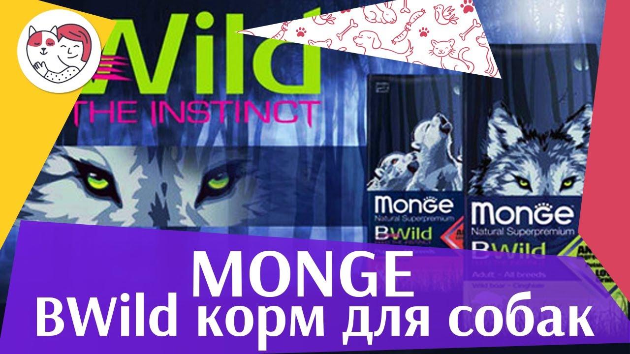 Monge BWILD для собак на ilikepet