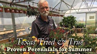 TX Tried & True Perennials for Summer (Part 1)