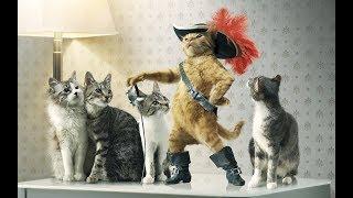 Смешные Приколы с Животными. Прикольные видео с Котами, Собаками...