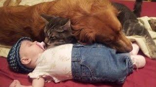 Дети и животные - как мило спят вместе. Сборник [NEW HD]