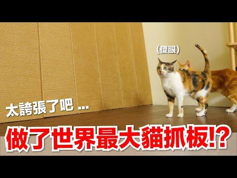 巨型貓抓板 大玩具降臨