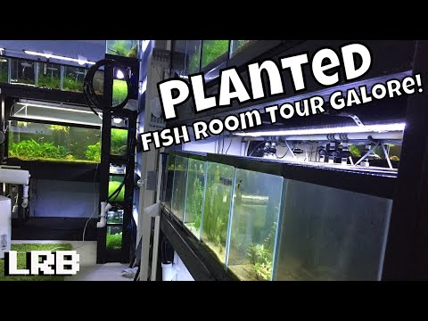 Huge Epic Planted Fish Room Aquarium Gallery Collection Freshwater Tour! Lots of Tanks!