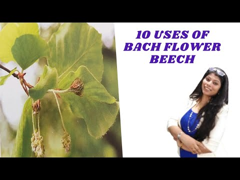 Beech bach flower remedy - architect,judge,reduce side effects of allopathy