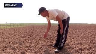 Басқарма басшысы өзбекстандық шаруалардың мақтауын асырды