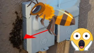How to Get Rid of a Bee Swarm In An Outside Electric Box? (Ways to Get Rid of Honey Bees)