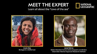 Saving Manatees: What It Takes - Meet the Expert | National Geographic thumbnail