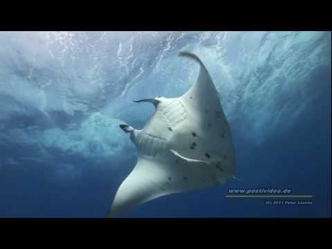"Raroia Atoll ""Shark Chanel"" Französisch Polynesien, Tuamotus AquaTiki Reisebericht Tauchen, diving, Raroia,Französisch-Polynesien"