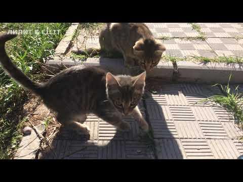 #кошки #забавныекотейки #питомцы Кошачье царство.