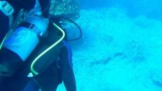 preview picture of video 'Resumen buceo en Hanga Roa - Rapa Nui'