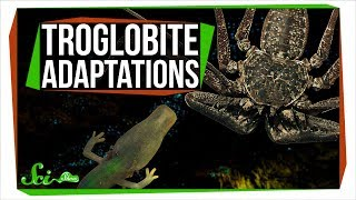 6 Animals with Extraordinary Adaptations to Cave Life
