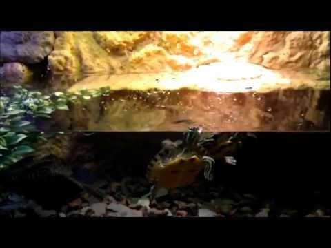 TURTLE TANK SETUP!! FACT!! A tank that's actually suited for turtles