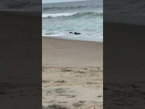 Video Of Cape Hatteras / Outer Banks KOA, NC