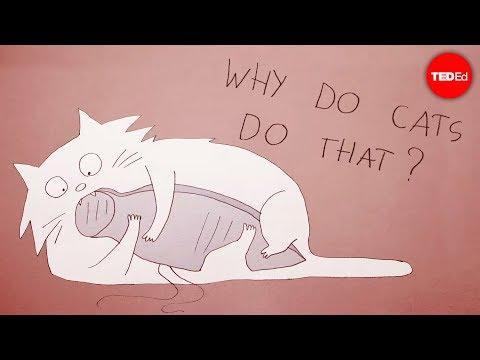 Proč se kočky chovají divně? - TED-Ed
