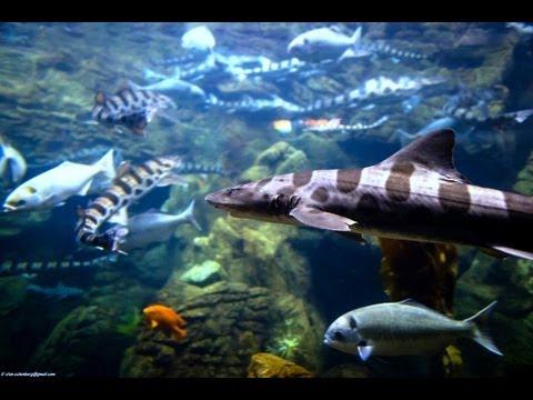 ♥♥ Relaxing 3 Hour Video of Ocean Fish