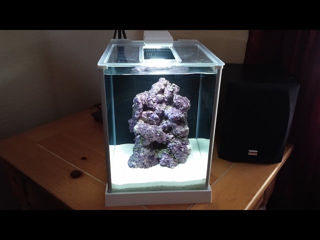 How to setup a Pico Reef Tank - Fluval SPEC 3 - Day 1