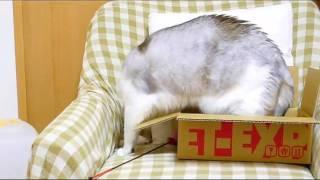 #09ぼくのお気に入り♪ うにの「うにっき動画」