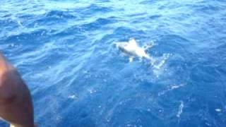 Морская рыбалка в Египте. Тунец. Red Sea Fishing. Big Tuna