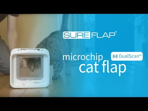 Learning a standard cat into the DualScan Microchip Cat Flap