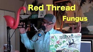 Red Thread Lawn Disease | Treating Lawn Fungus