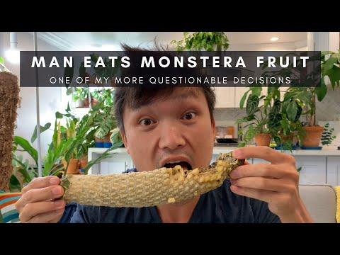 , title : 'I Eat Monstera Fruit | Monstera Deliciosa Mukbang | Rare Tropical Exotic Fruits | vlog 2