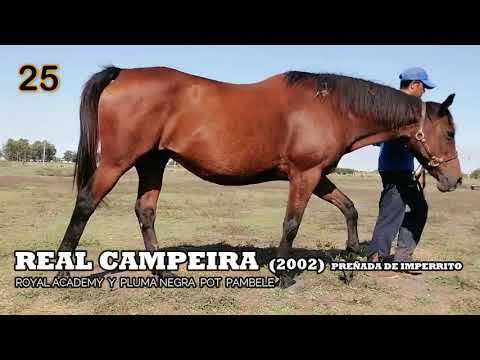 Lote REAL CAMPEIRA (BRZ)