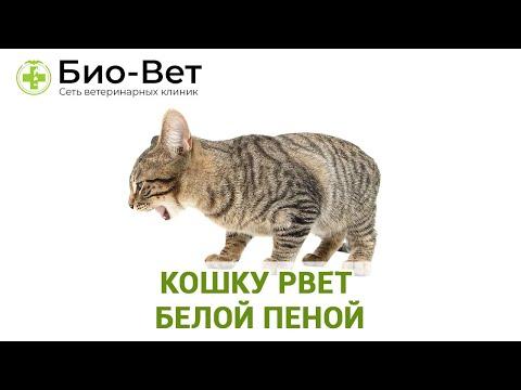 Кошку рвёт белой пеной - причины и что делать // Сеть Ветклиник Био-Вет
