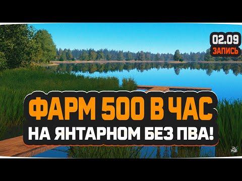 Фарм 500 в час без пва на янтарном озере