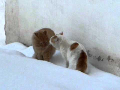 Кошаки - чёткие пацанчики